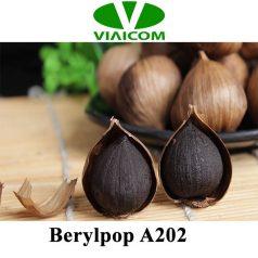Berylpop A202