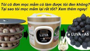 Cách làm tỏi đen bằng máy làm tỏi đen LUVA D2